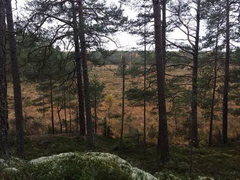 201023 Fjällmossens naturreservat