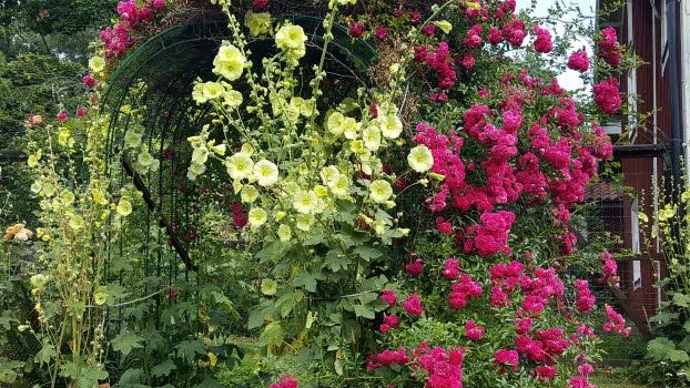 Kärlekens trädgård 2021-07-19