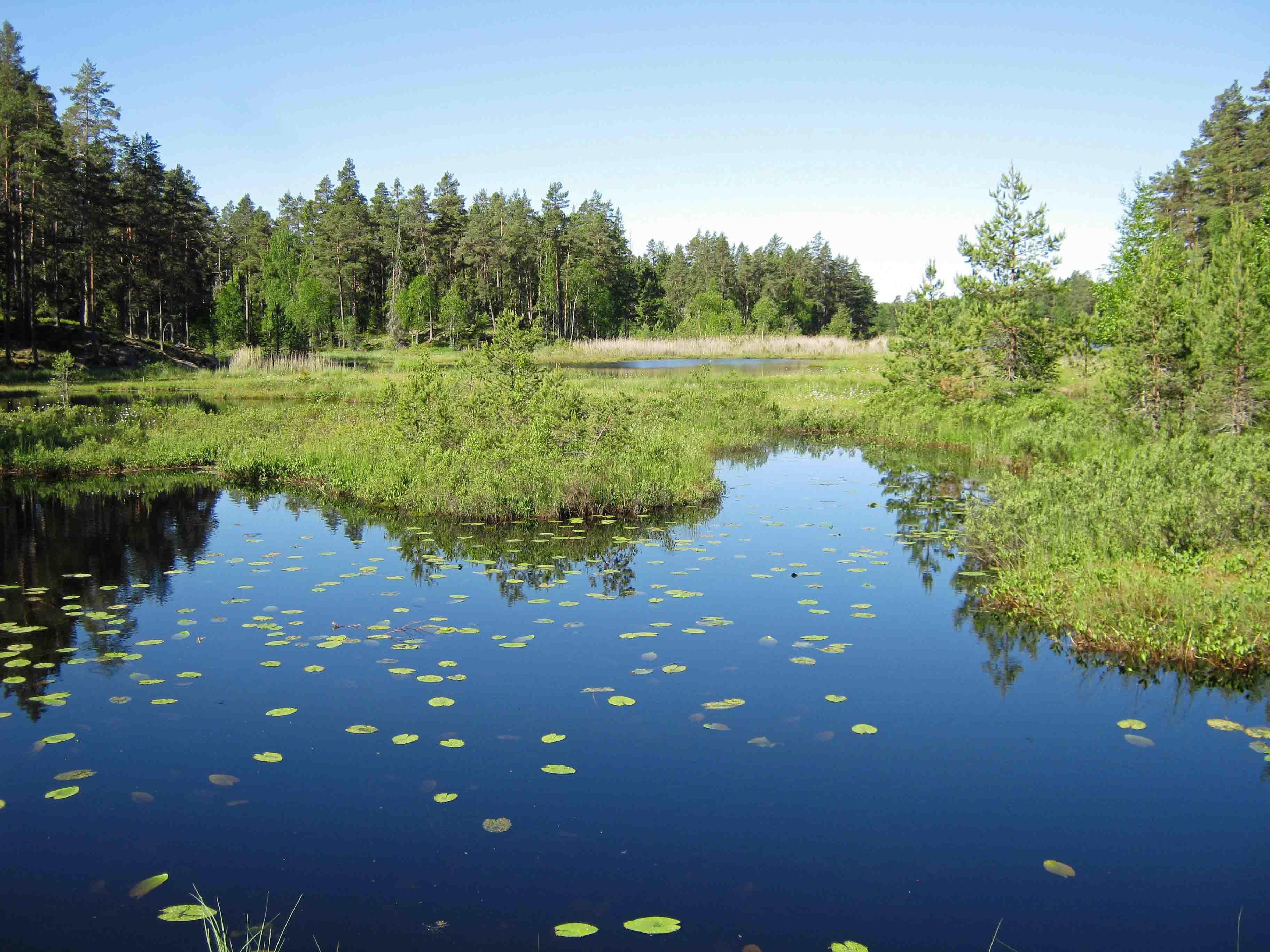 Den svenska naturen