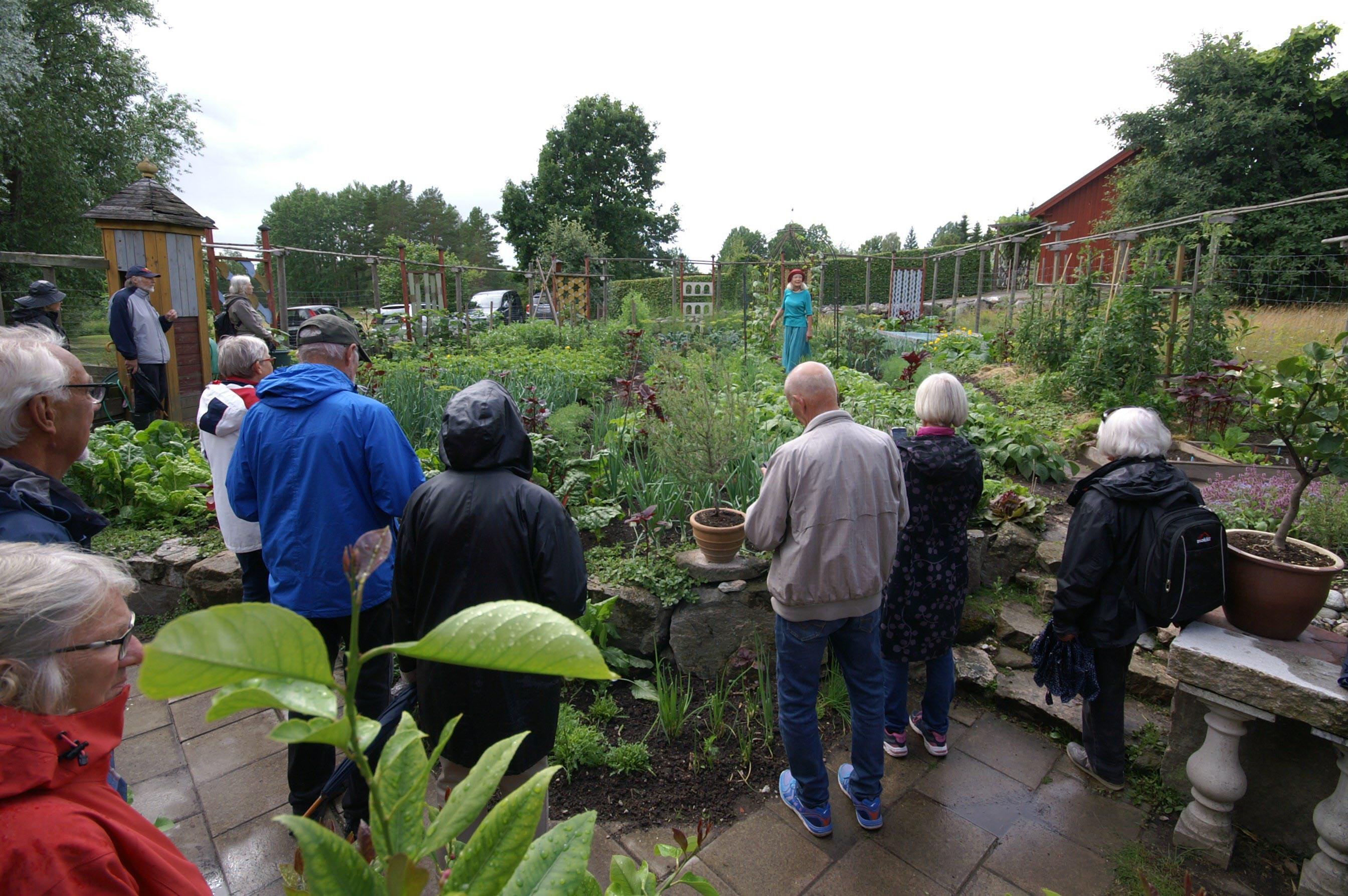 I den moderna köksträdgården saknas inga nyttoväxter