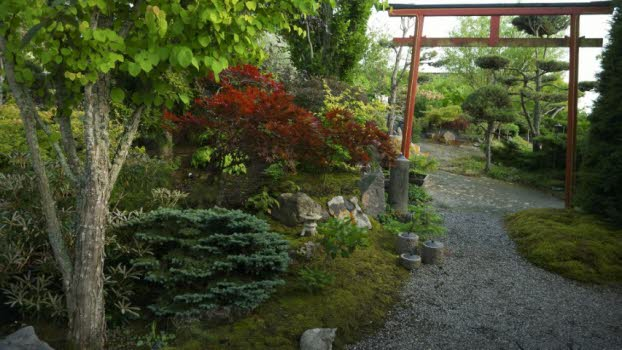 210804 Besök i japansk trädgård