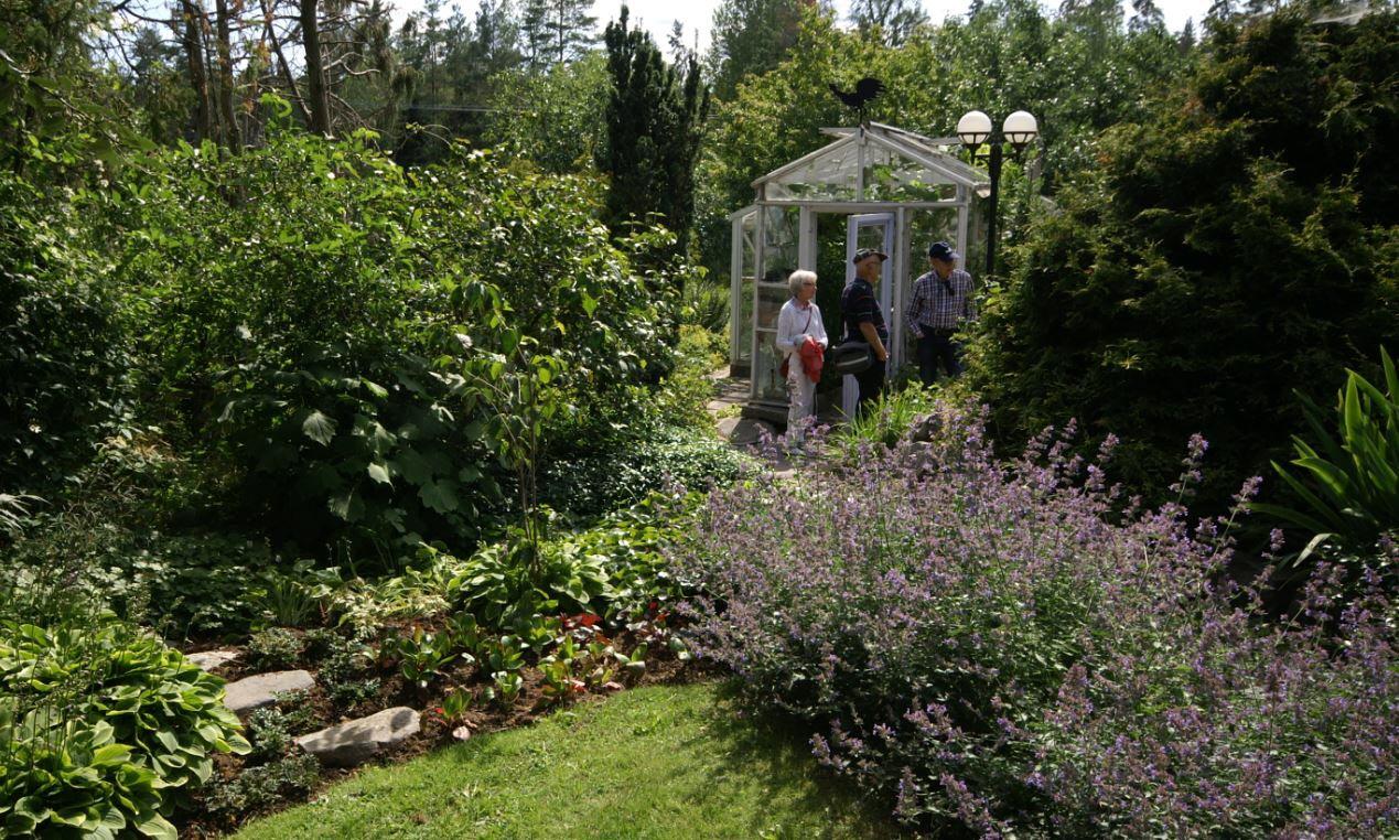 Växthuset med vinranka