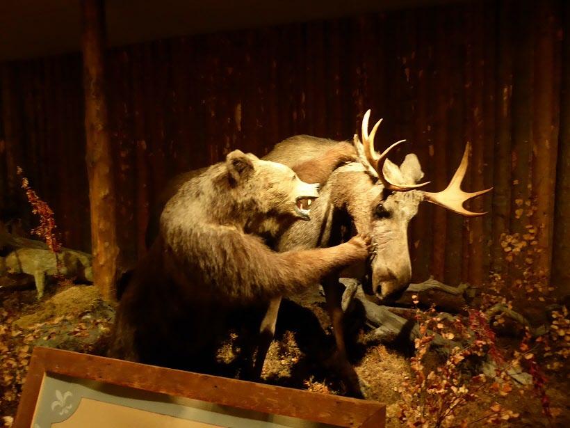 Besök på Svansele Vildmarkscenter med uppstoppade djur.
