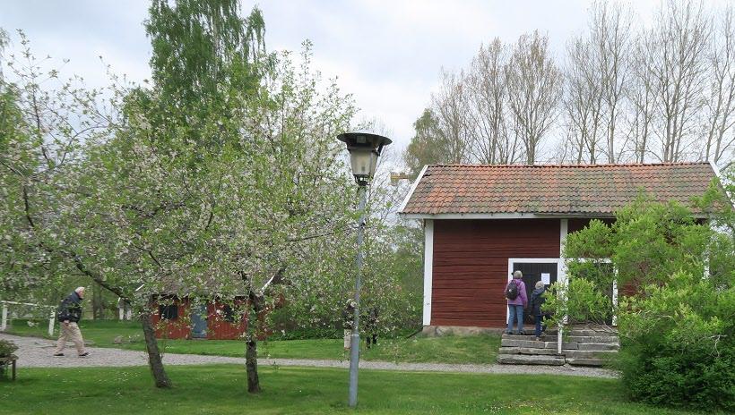 Tipspromenad bland blommande fruktträd