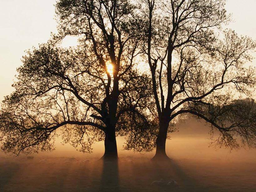 Träd med soluppgång och dimma