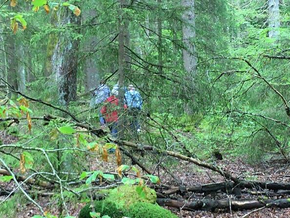 8 juni 2020 Sista promenaden i Råaköps skogar?