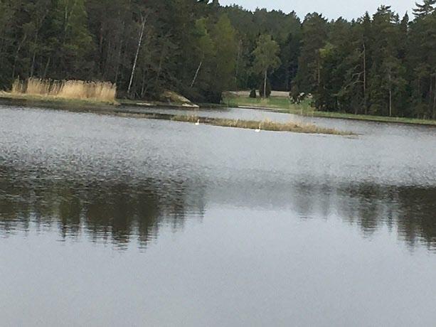 Utsikt över Fadadammen (inte bara en kvarn) med svanar.
