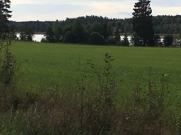 Vacker utsikt över gärdet ner till Bålsjön.