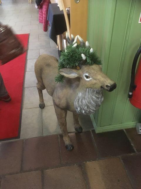 På dagen har Rudolf inte röd mule.