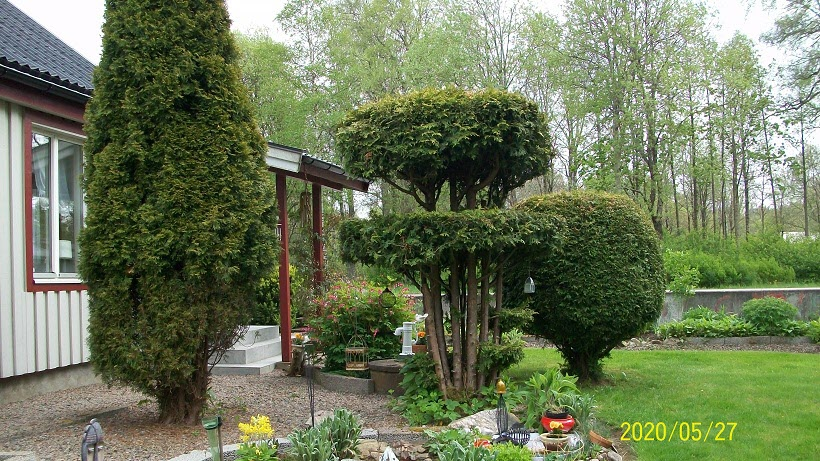 Ilonas välskötta trädgård!