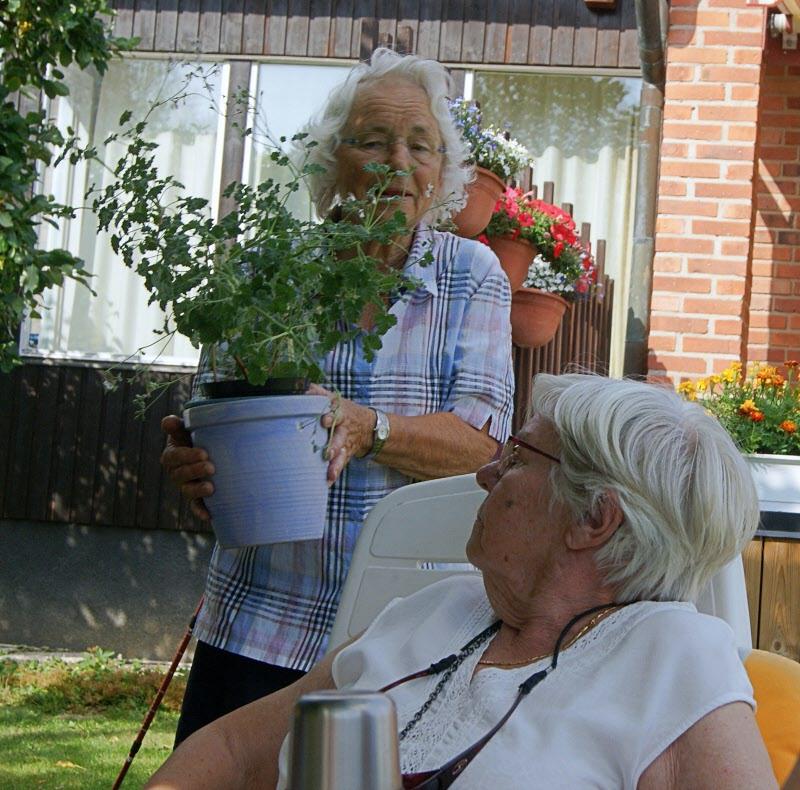 """Kari visar upp Muskotpelargonen """"Marias blomma"""""""