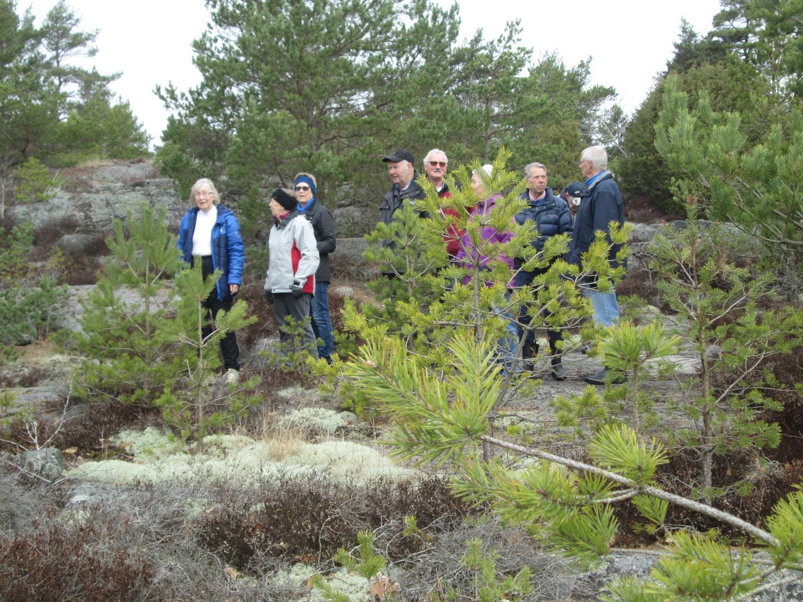 Tät vegetation