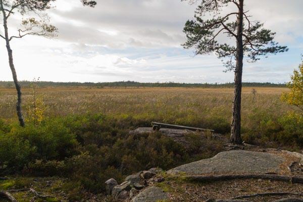Södra Åsmossen som ingår i Vargaviddernas naturreservat är en mäktig  mosse med påtaglig vildmarkskänsla.