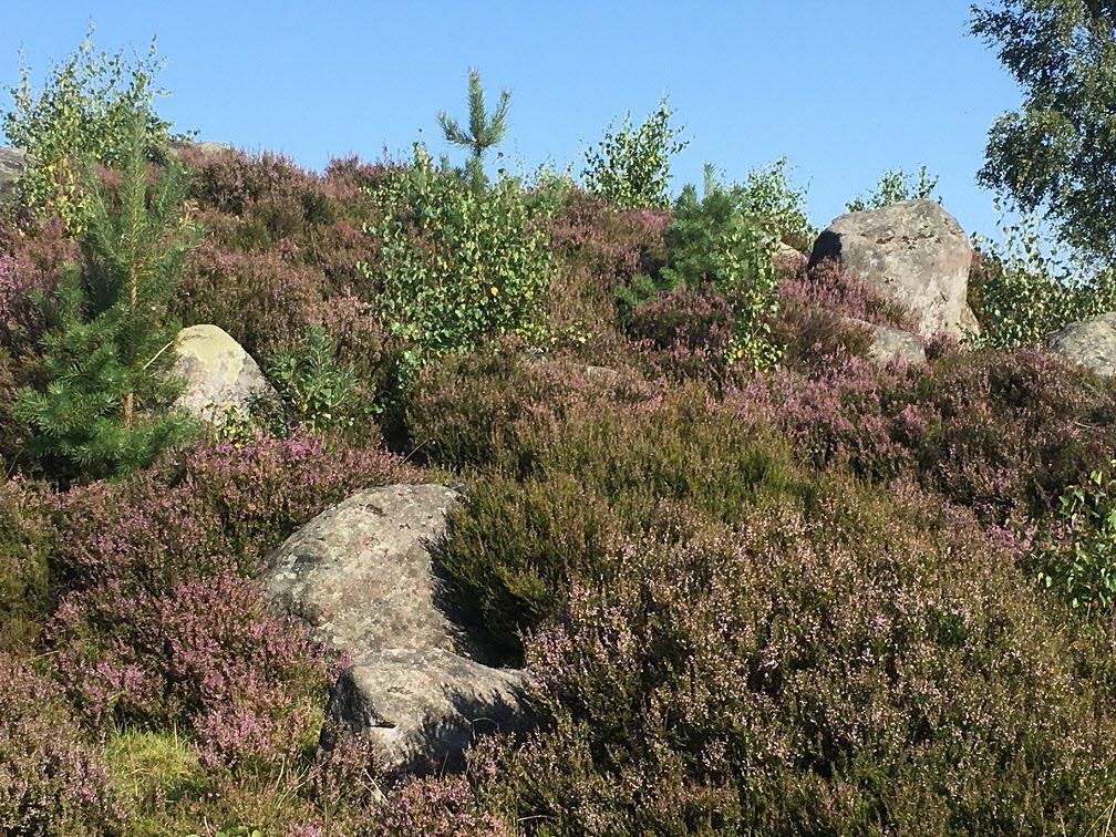 13000 år gamla stenblock efter inlandsisen.