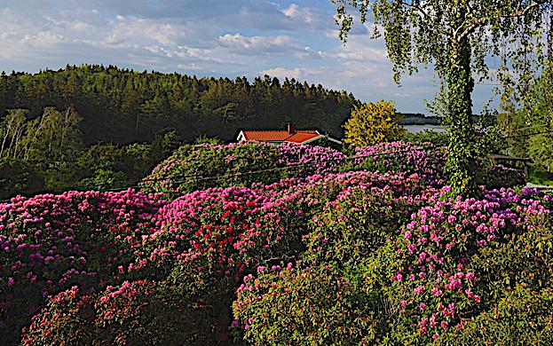 Runes rhododenronpark